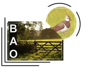 Logo-BAO