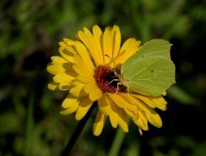 160825_vlinder3